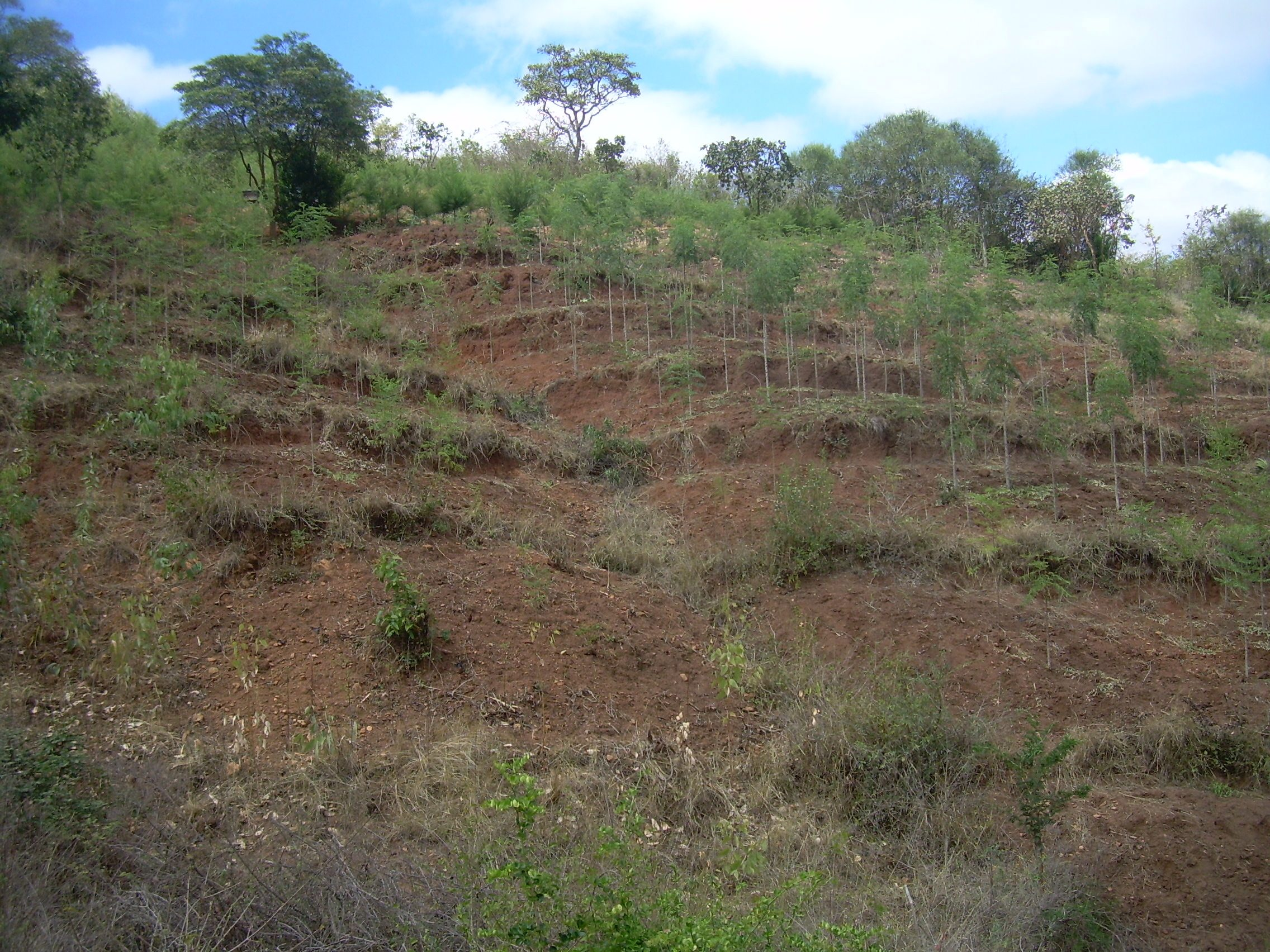 MADP: Musaalani Afforestation Demonstration Plantation